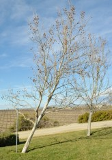 Paso Robles Winery Trip