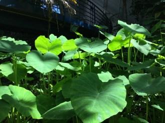 botanic4