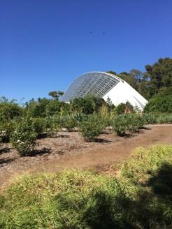 botanic7