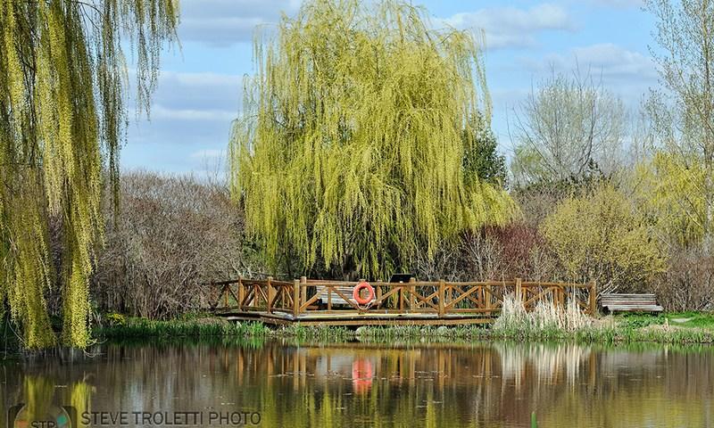 """The Pond at the Tree House """"Maison de l'arbre"""""""