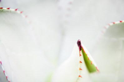 flora-04-2011-11-27-_MG_1193