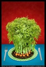 Food photography 3: Fresh!