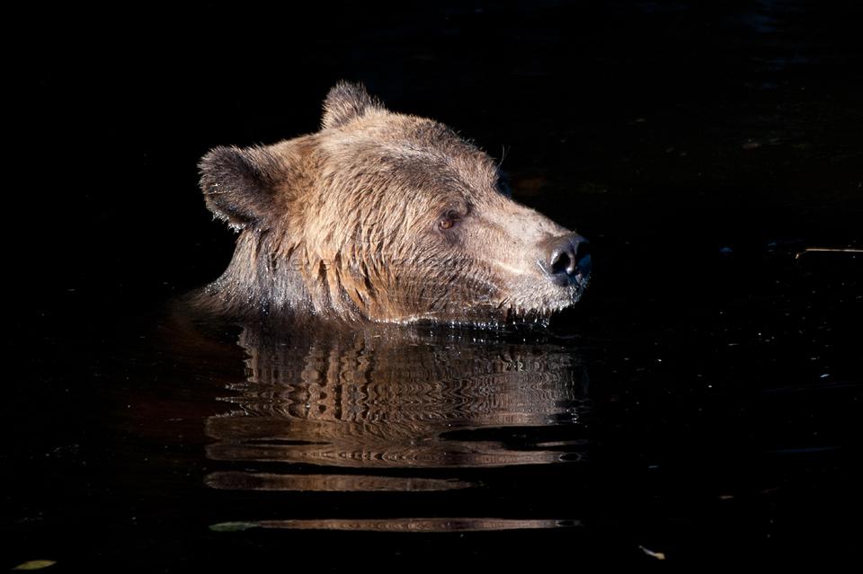 Forlorn-Bear.jpg