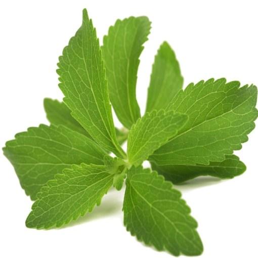 About stevia plant