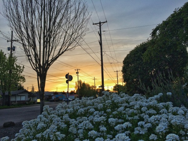 A photo of flowers and the sunset in Portland, Oregon
