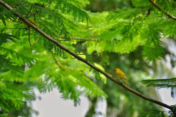 Photo of a bird in panama