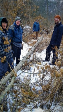 The stewardship team gingerly hauls a dead cedar through the brush.