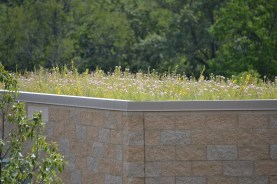 Native Green Roof at Shaw Nature Reserve