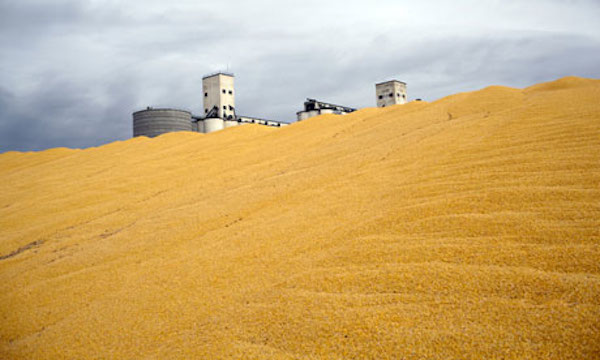 Harvested corn at a silo in Colorado.  Photograph: Robert Nickelsberg/Getty Images