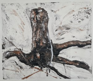 Stump #201 [Roly's Stump], Monoprint on Newsprint, 30cm x 36cm, Not for Sale. an Old Apple Tree stump grubbed out from land at Weeke Hill