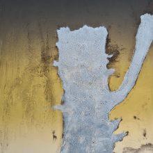 Stump #192 [Gallants Oak Ghost], Monoprint, 36cm x 30cm, £120