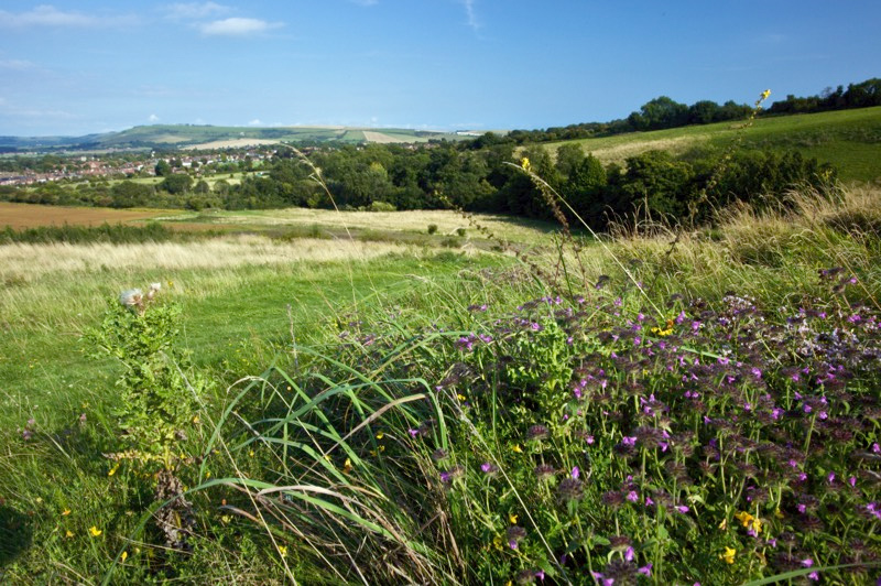 view of chalk grassland