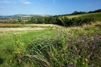 view of chalk grassland