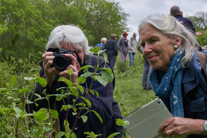 two women photographing a butterfly on plants on the Downland