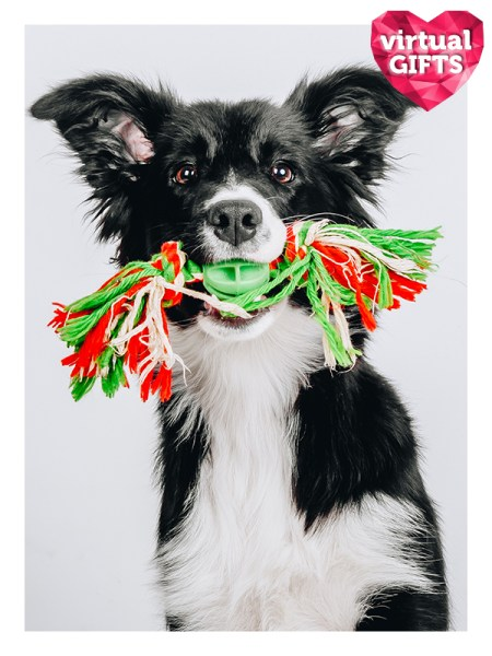 Toys for a rescue