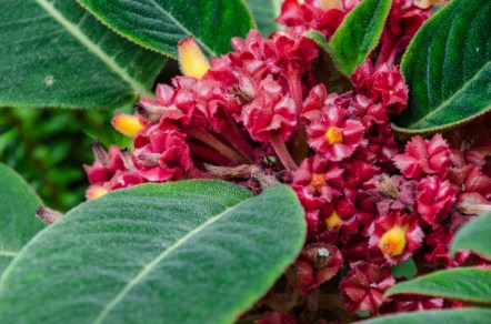 Botanical Garden_Jun 19 2016_0122