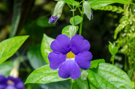 Botanical Garden_Jun 19 2016_0150