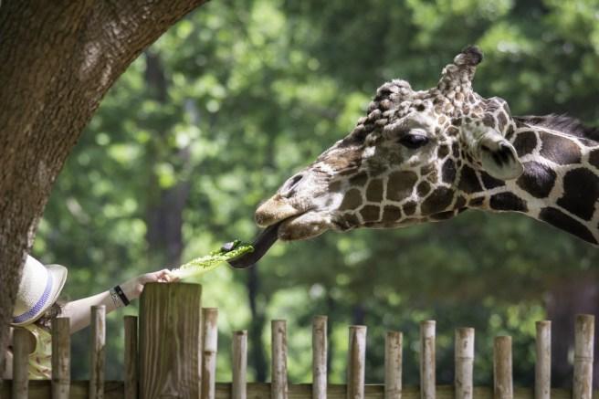 Zoo Atlanta-2931