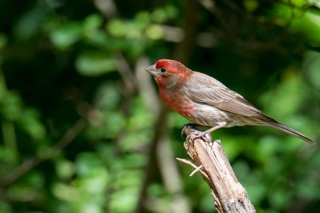 Birds-4245