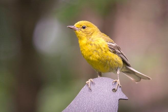 Bird Watching-5850