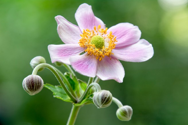 Atlanta Botanical Garden-6242-Edit-Edit