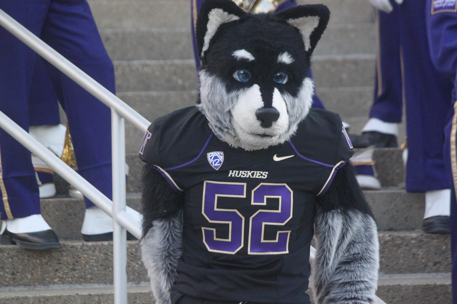 Washington Huskies mascot Harry the Husky