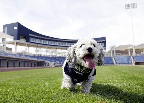 Hank the Dog Milwaukee Brewers