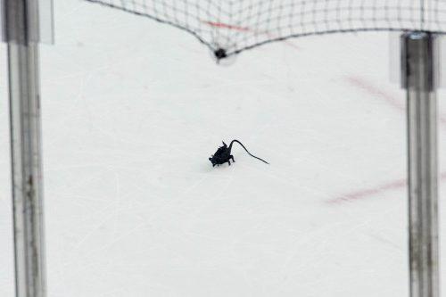 Rat trick Florida Panthers