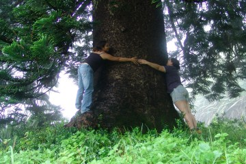 Hugging a tree in Levelwood
