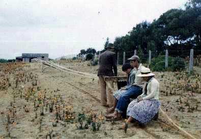 Flax rope making .1961, St Helena Island