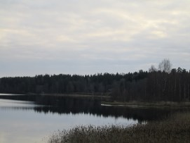 Ett svanpar simmar lugnt vid Sjögränd ...