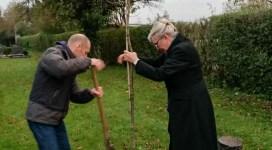 Die Luthereiche wird gepflanzt