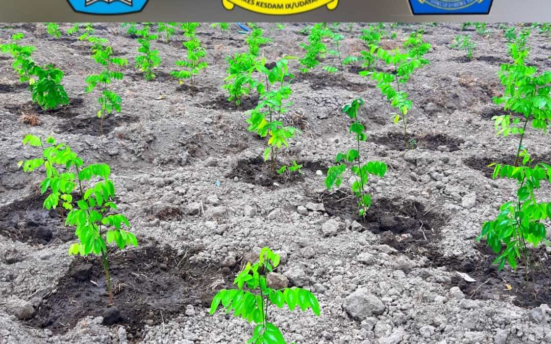 Pengembangan Lahan Pertanian