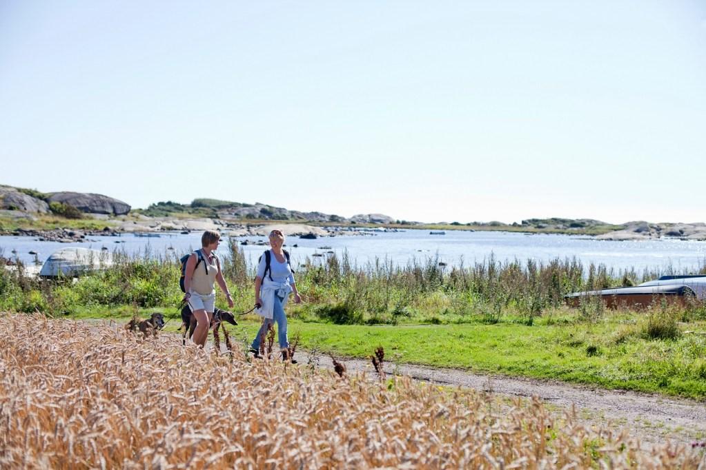To damer meg hver sin hund vandrer rolig på kyststien i Vestfold. Blå himmel og solskinn.