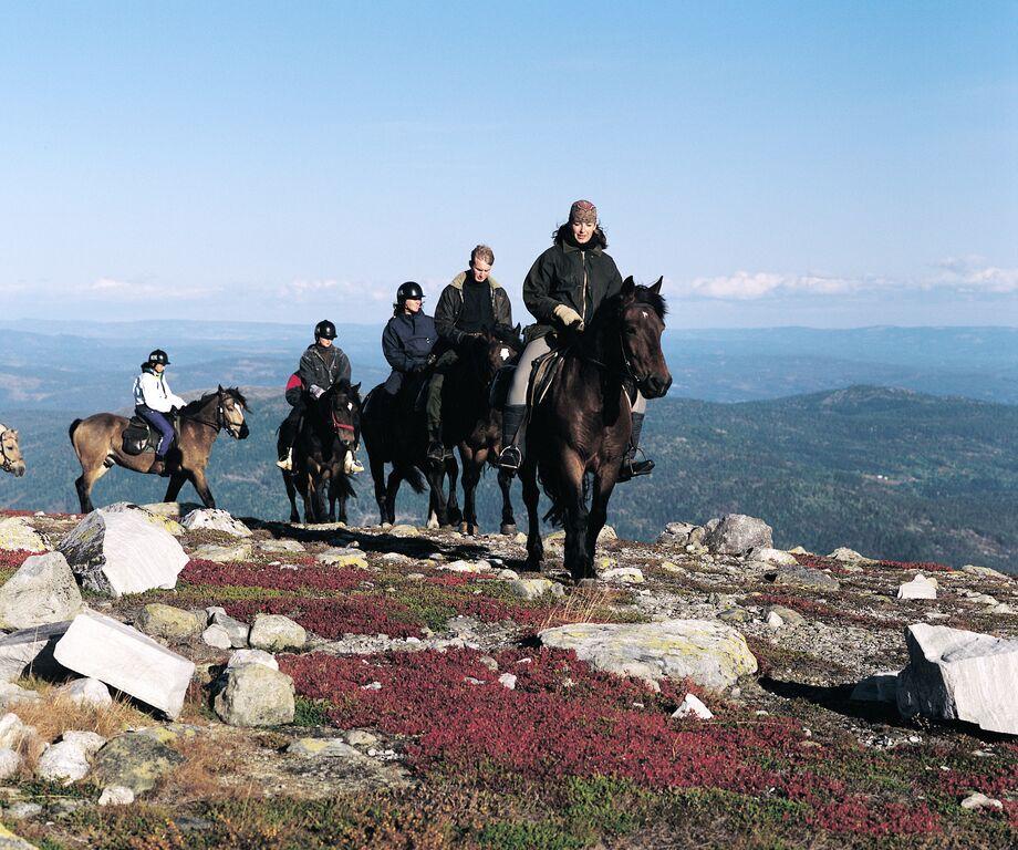 Følge på fem til seks ryttere til hest på ridetur i høyfjellet på Norefjell.