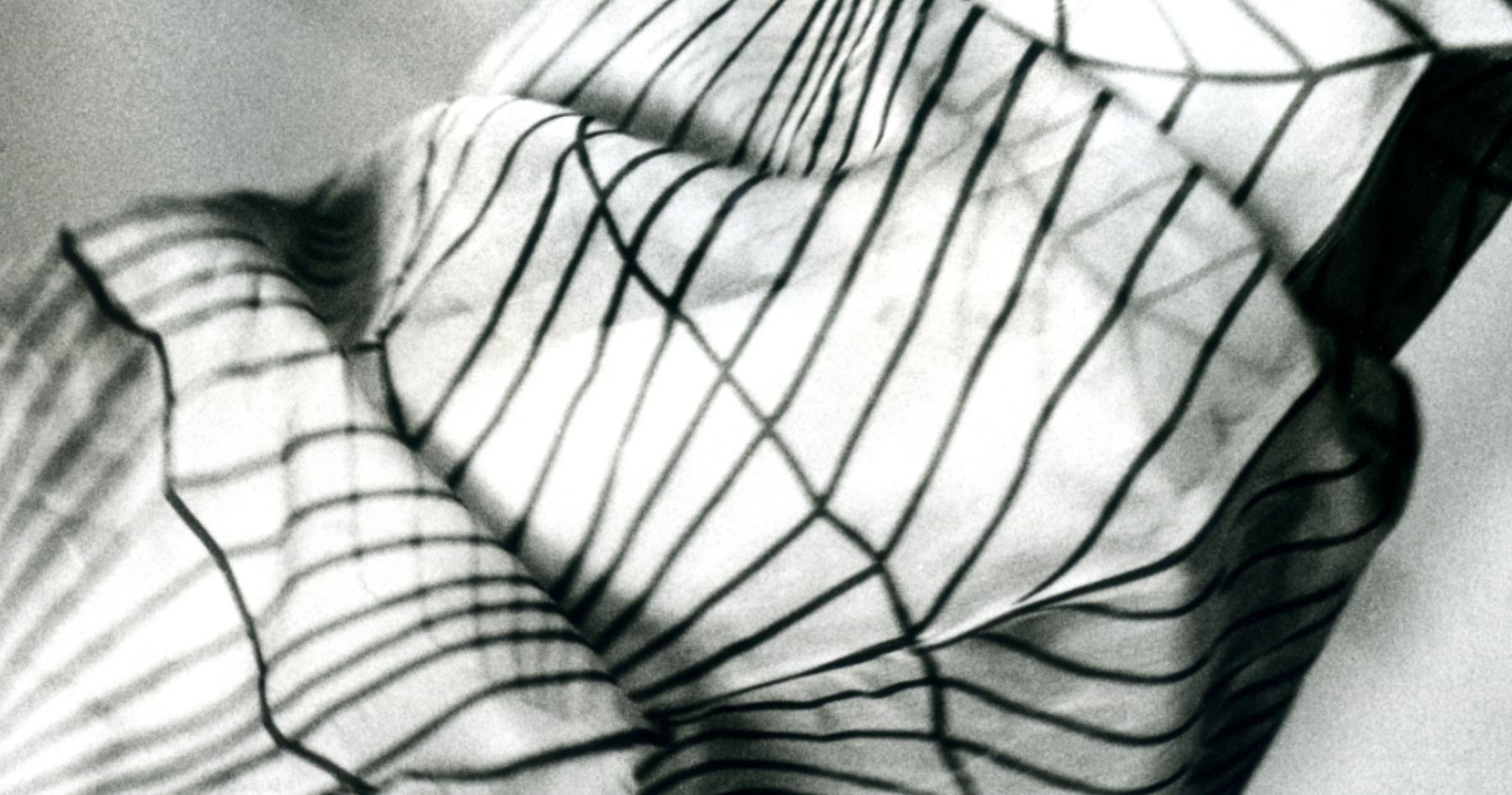 Stil-Stengel, Design nach Mass, Textilkunst, Siebdruck auf Organza