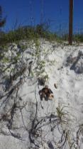 George, Christmas, holiday, travel, beach, Cortez Beach, Florida