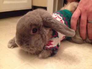 Morty, sweater, dogs in sweaters, Monday, S.A. Young, rabbit, bunny in a sweater