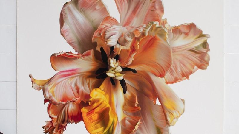 Zijdeachtige bloemen komen uit de enorme hyperrealistische tekeningen van CJ Hendry in kleurpotlood