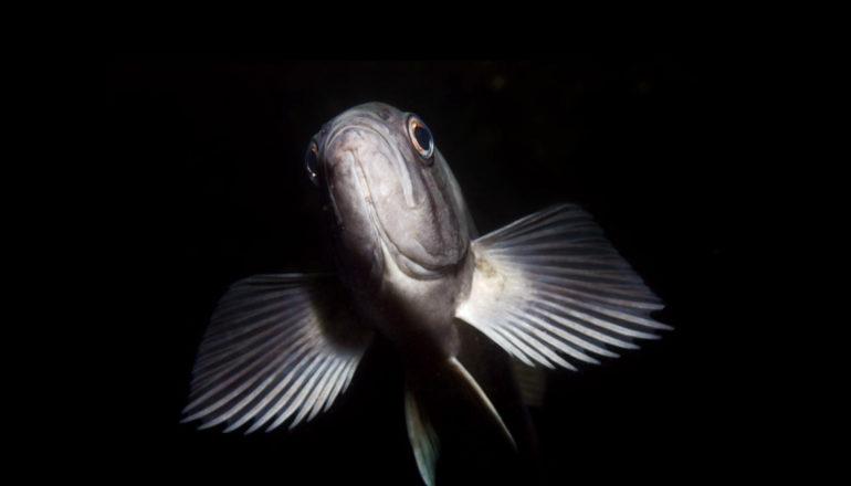 Lage zuurstof duwt vissen in ondieper water