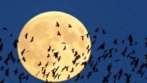 n-super-moon-large570_arthra_arthrografia_04-ellada-kosmos_2016_11-noemvrios560_300