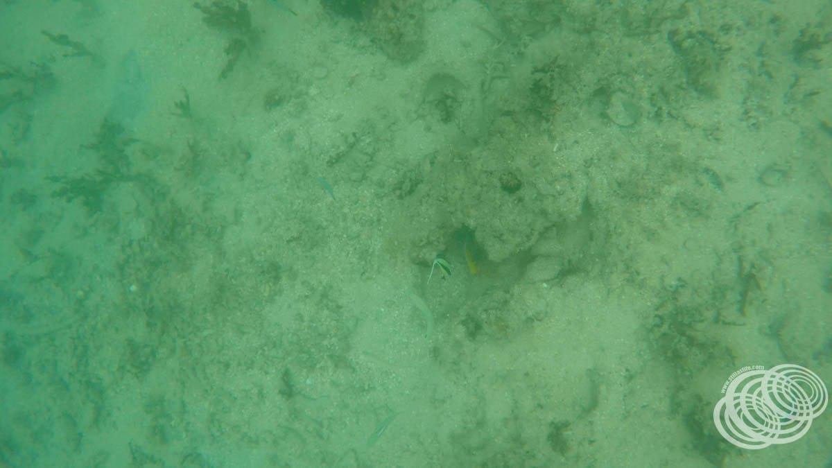 Three fish that I found in deeper water, including an angel fish.