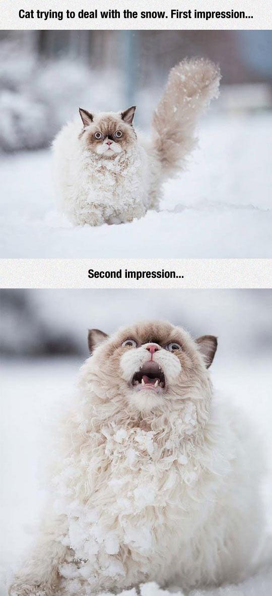 Still Cracking 187 Cat And Snow Still Cracking
