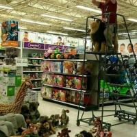 Lion King At Toys R Us