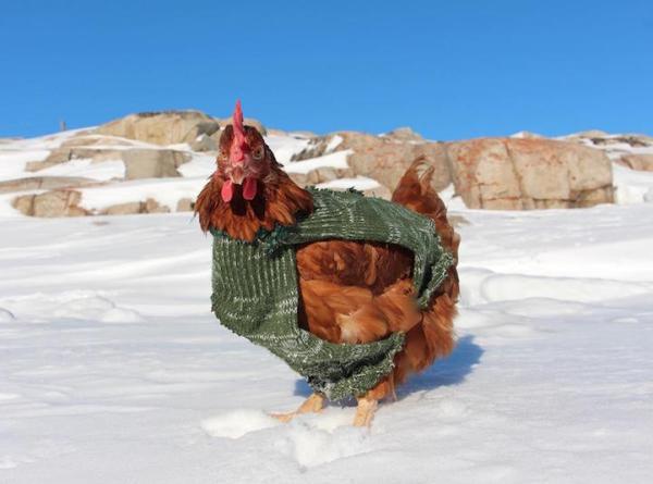 Adventurous Man Travels Around the World With His Pet Chicken