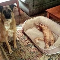 19 Photos of Cats Taking Over Dog Beds