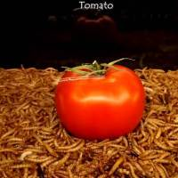 10,000 Mealworms Devouring Vegetables