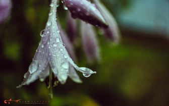 rain flowers-18