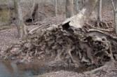 tree-4671