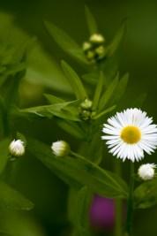 Flower-0474
